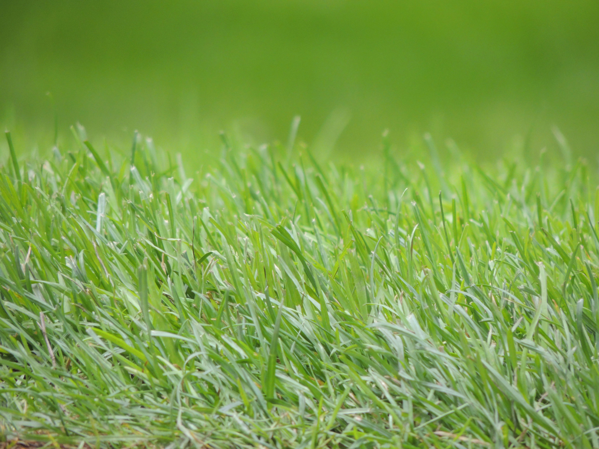 Envyness – The grass is always greener on the other side